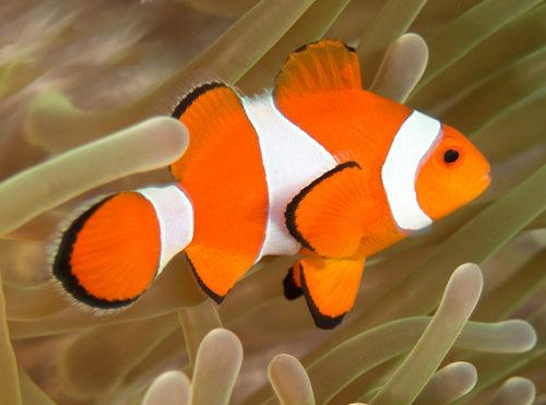 آکواریوم آب شور دلقک ماهیان